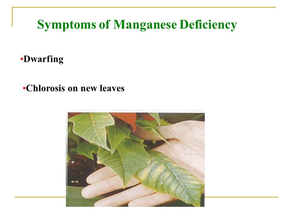 Symptoms of Manganese Deficiency