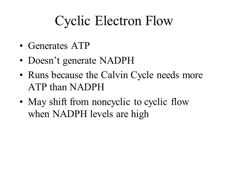 Cyclic Electron Flow Generates ATP Doesn't generate NADPH
