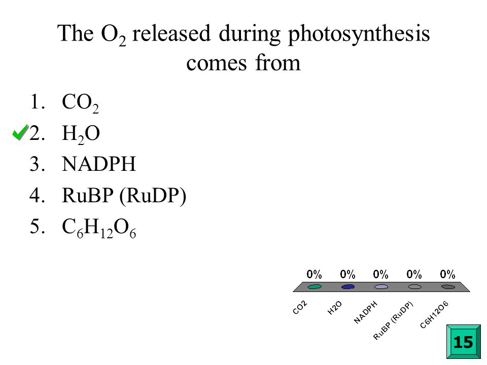 The O2 released during photosynthesis comes from