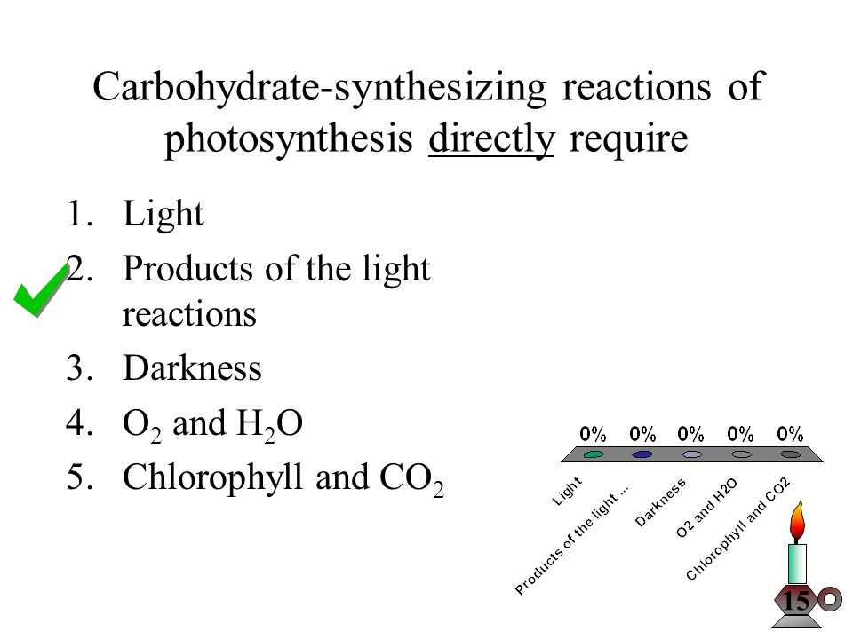 Carbohydrate-synthesizing reactions of photosynthesis directly require