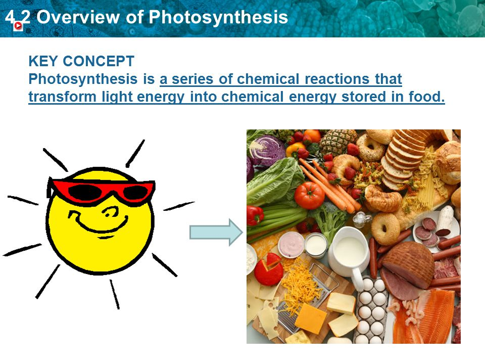 KEY CONCEPT Photosynthesis is a series of chemical reactions that transform light energy into chemical energy stored in food.