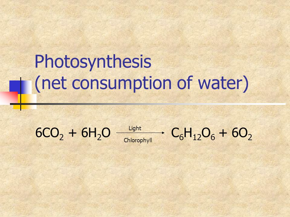 Photosynthesis (net consumption of water)