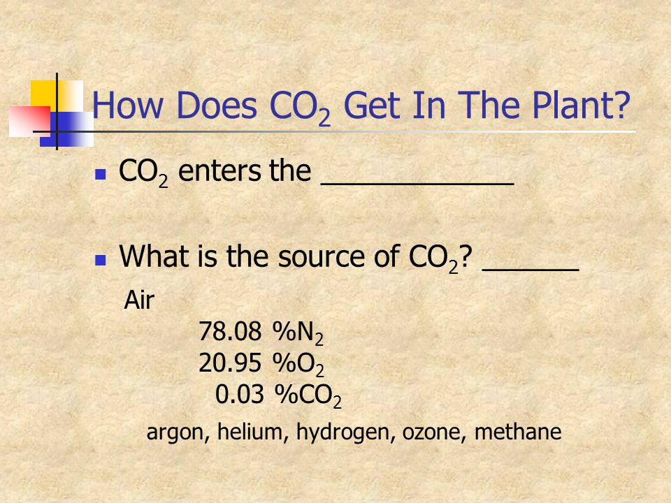 How Does CO2 Get In The Plant