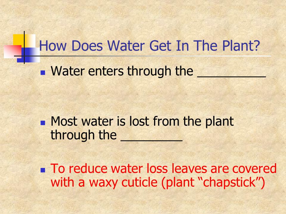How Does Water Get In The Plant