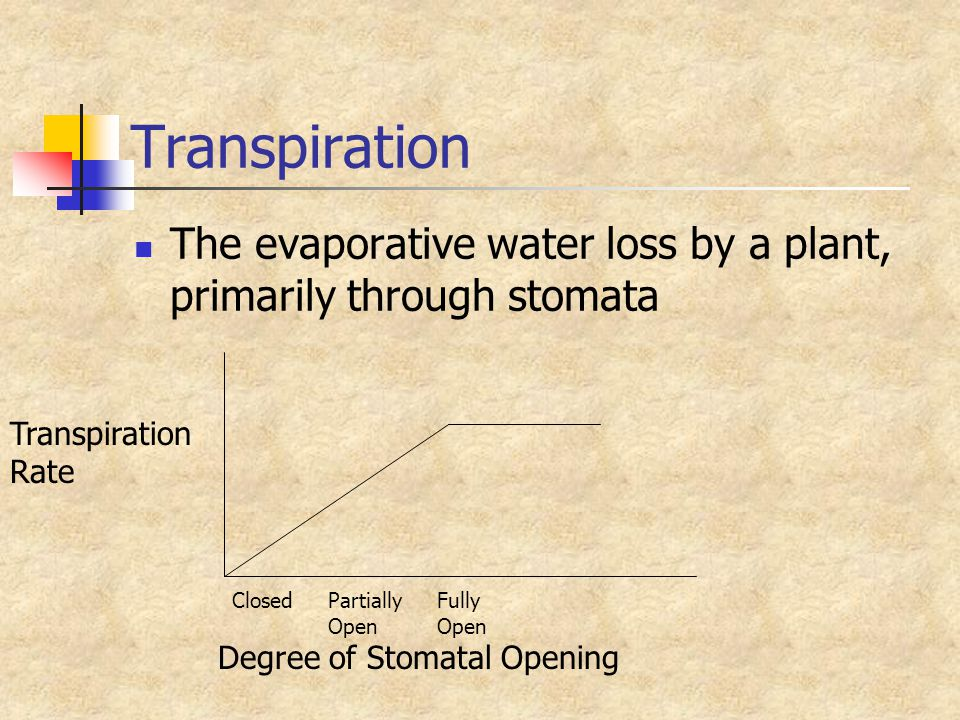 Transpiration The evaporative water loss by a plant, primarily through stomata. Transpiration. Rate.