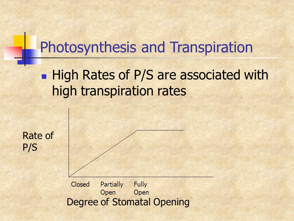 Photosynthesis and Transpiration
