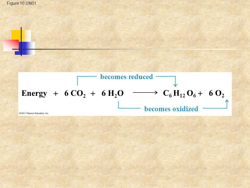 Energy  6 CO2  6 H2O C6 H12 O6  6 O2 becomes reduced