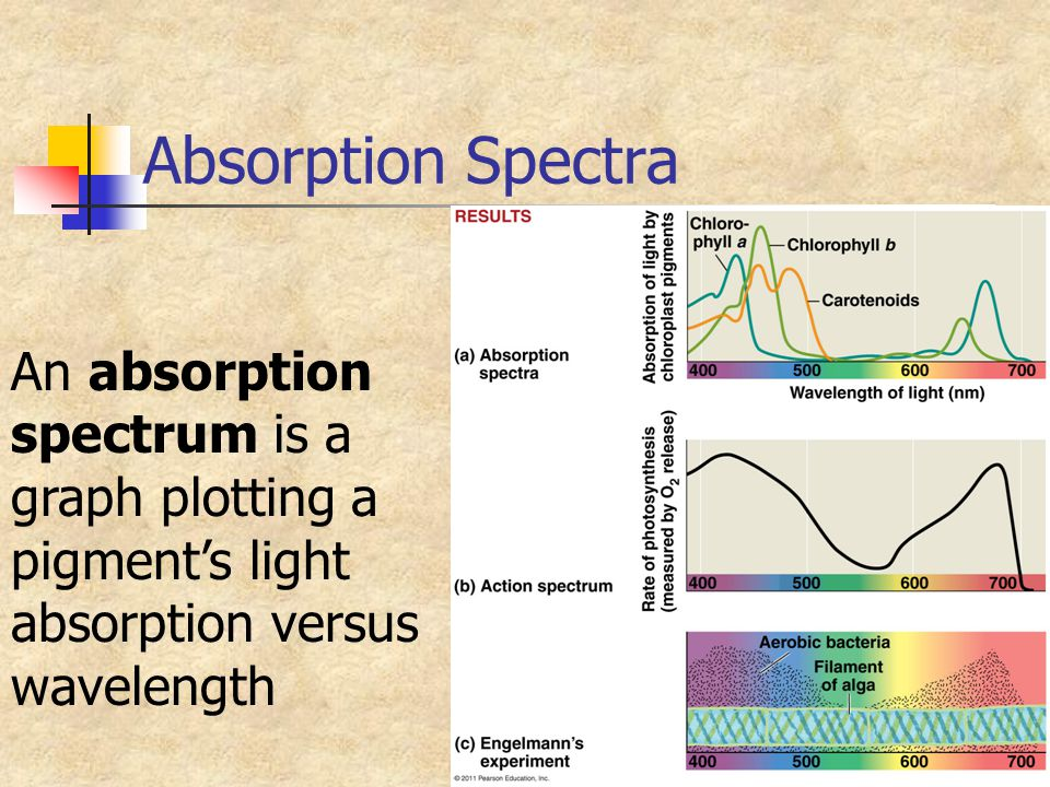 Absorption Spectra An absorption spectrum is a
