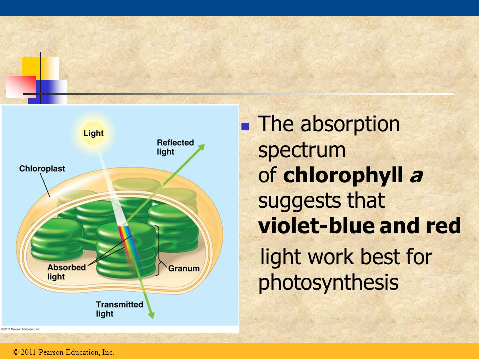 light work best for photosynthesis