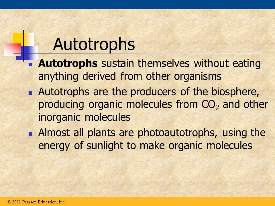 Autotrophs Autotrophs sustain themselves without eating anything derived from other organisms.