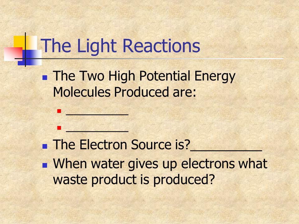 The Light Reactions The Two High Potential Energy Molecules Produced are: __________. The Electron Source is __________.