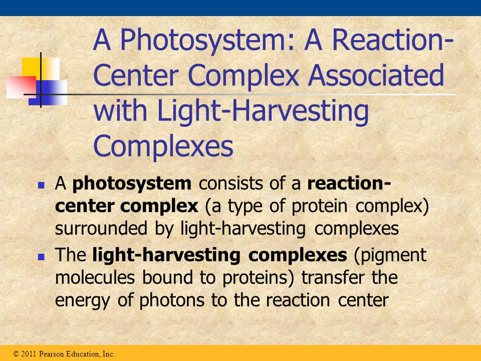 A Photosystem: A Reaction-Center Complex Associated with Light-Harvesting Complexes