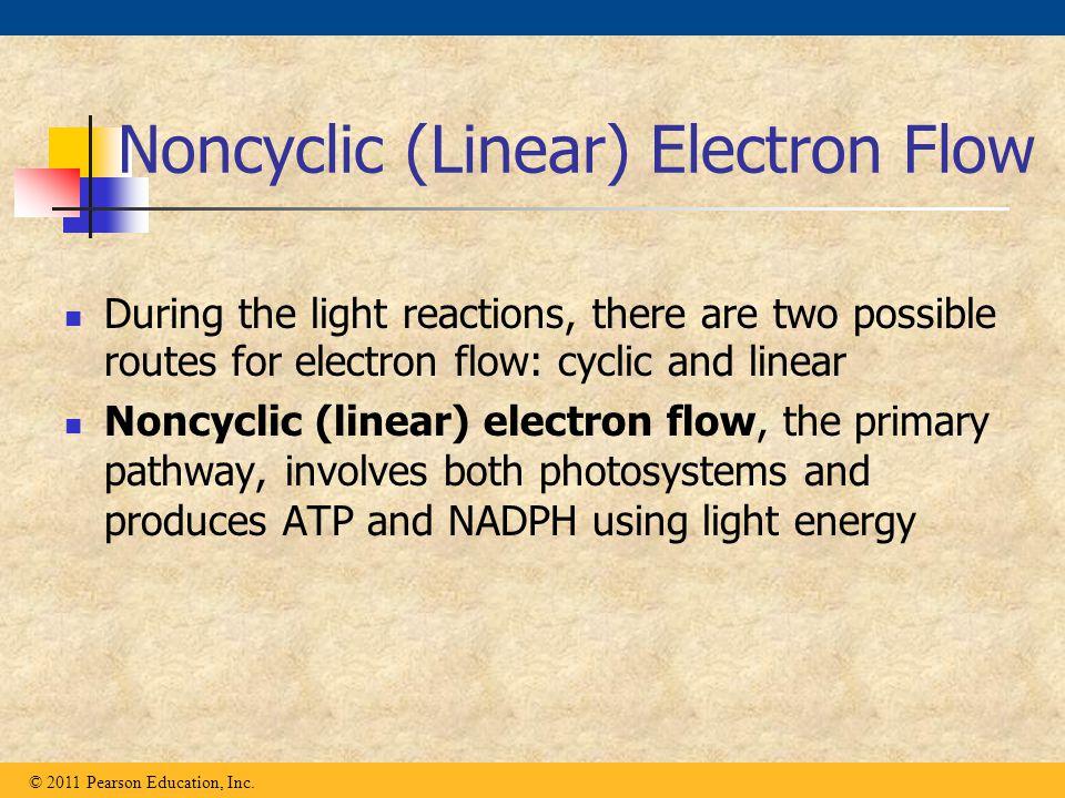 Noncyclic (Linear) Electron Flow