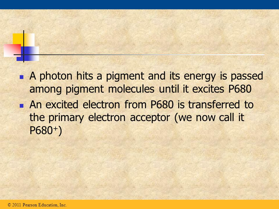 A photon hits a pigment and its energy is passed among pigment molecules until it excites P680