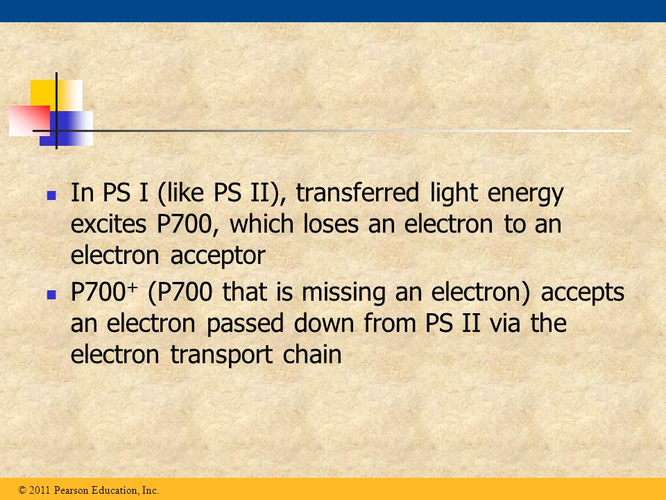 In PS I (like PS II), transferred light energy excites P700, which loses an electron to an electron acceptor