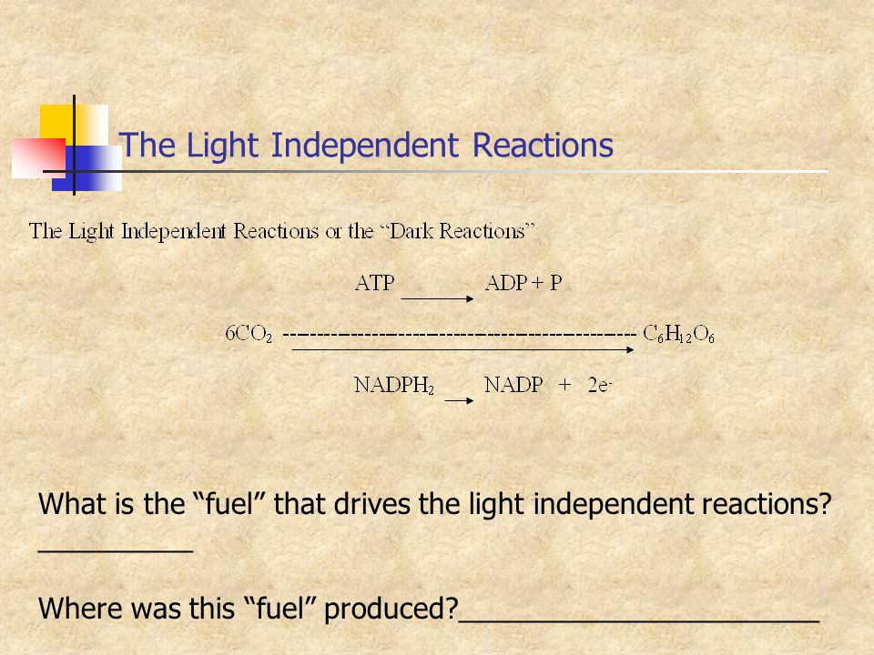The Light Independent Reactions