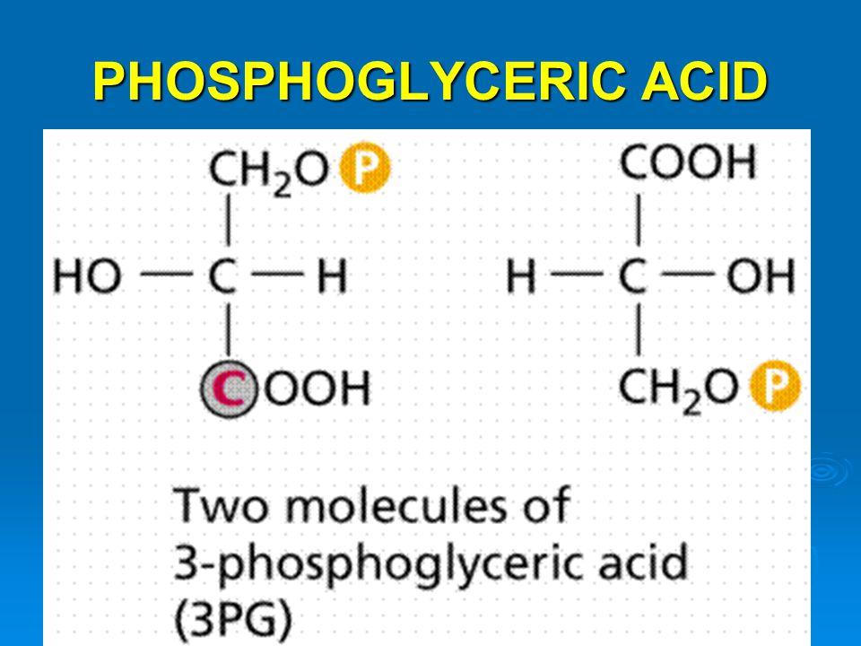 PHOSPHOGLYCERIC ACID