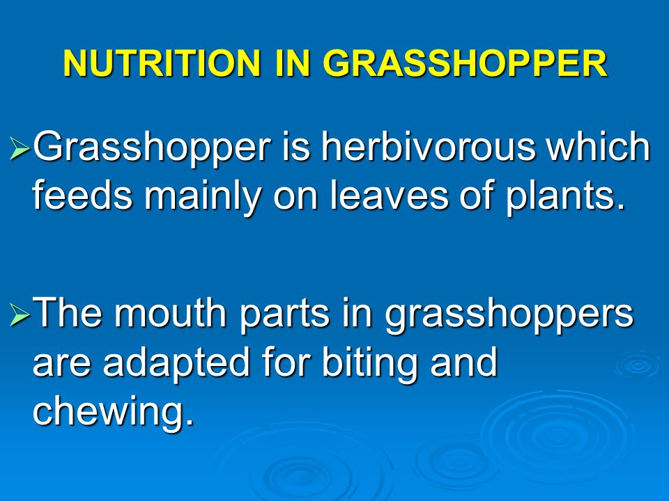 NUTRITION IN GRASSHOPPER