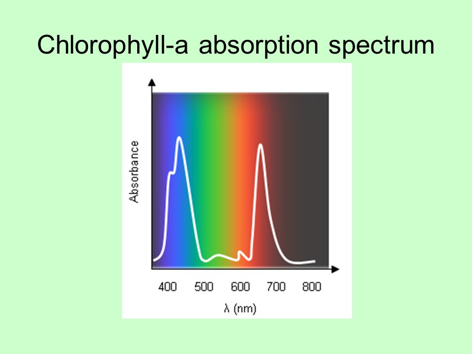 Chlorophyll-a absorption spectrum