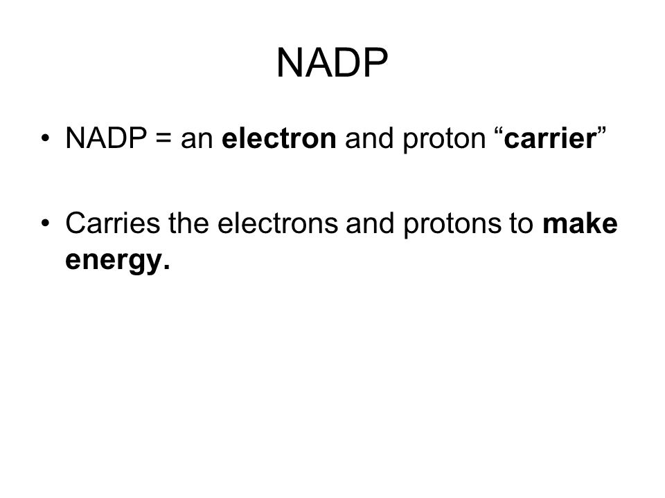 NADP NADP = an electron and proton carrier