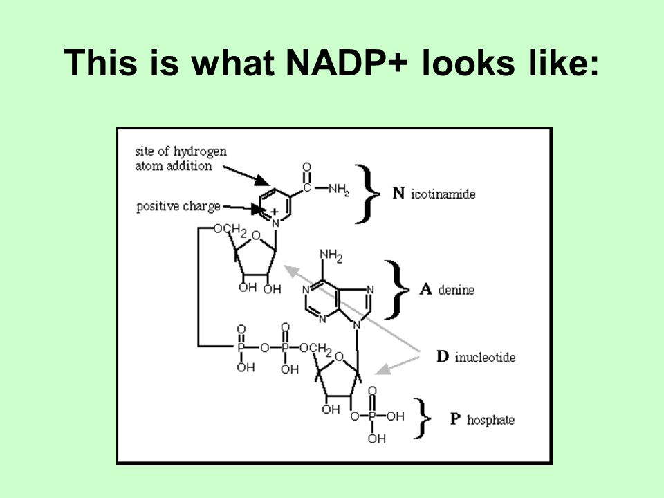 This is what NADP+ looks like: