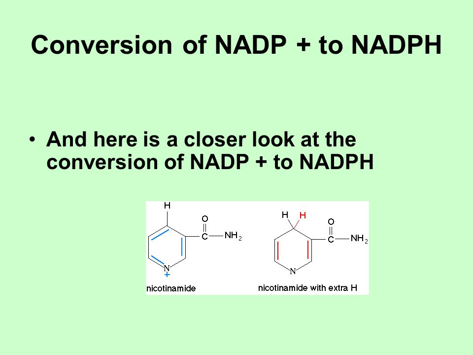 Conversion of NADP + to NADPH