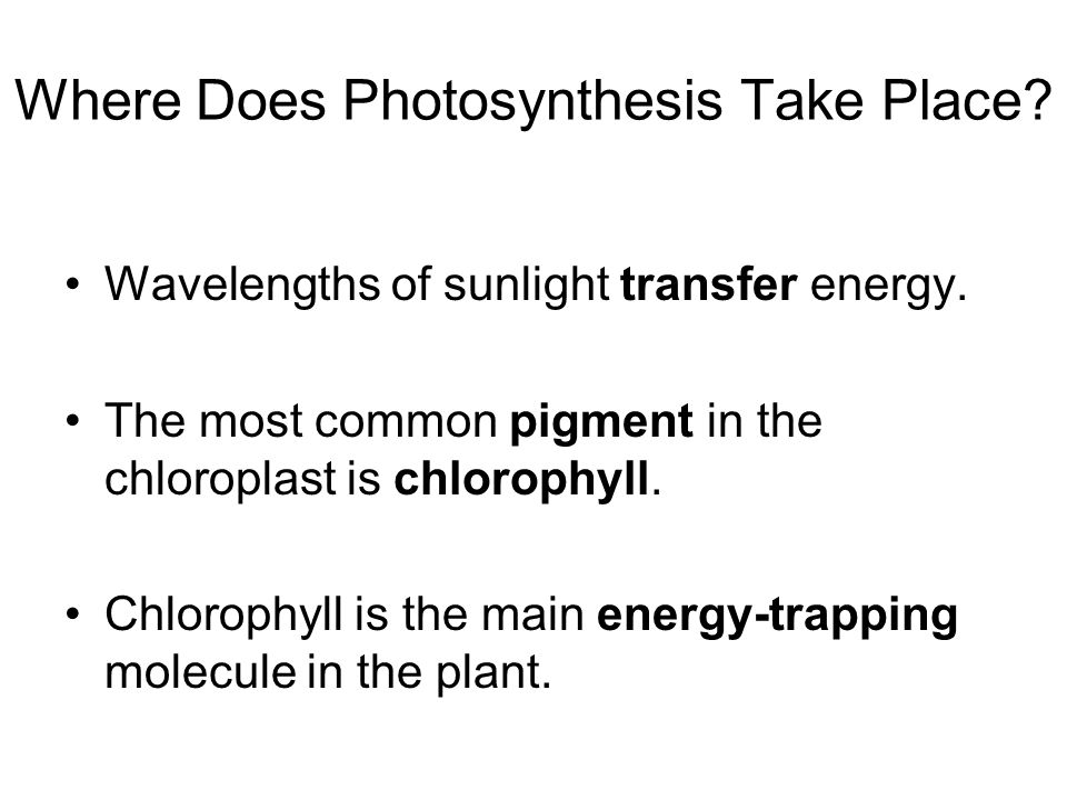 where does photsynthesis take place Where does photosynthesis take place chloroplasts what are the inputs of photosynthesis co 2, h 2 o, light what are the outputs of photosynthesis.
