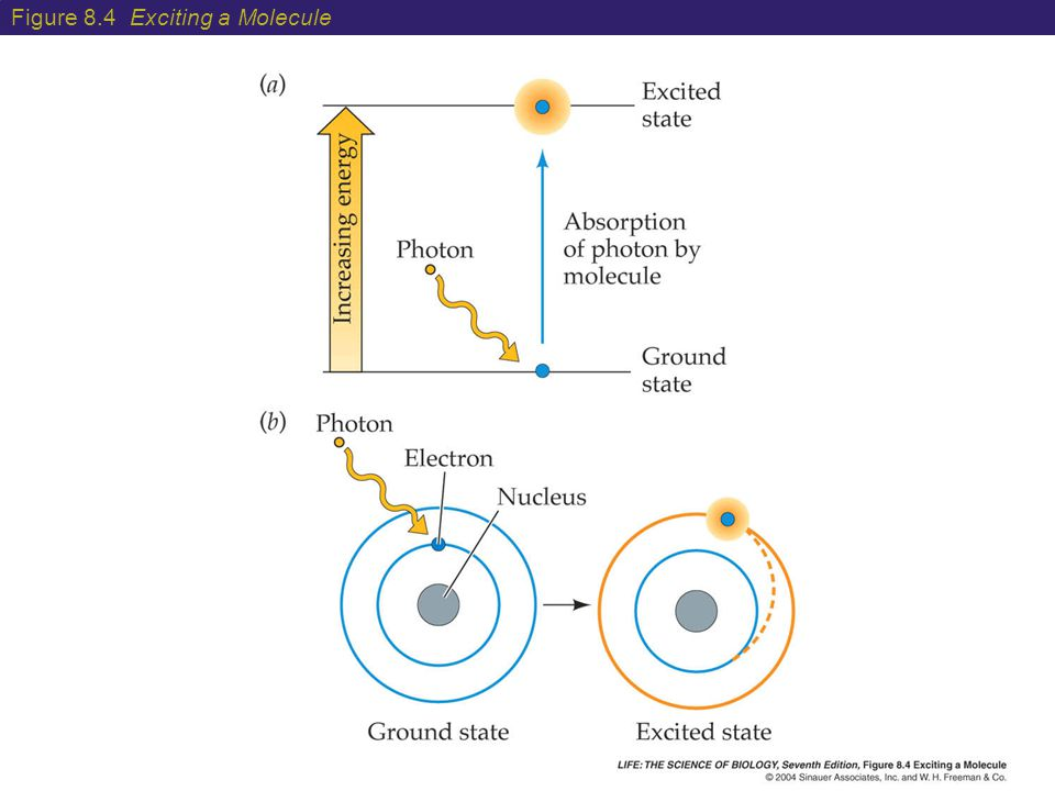 Figure 8.4 Exciting a Molecule