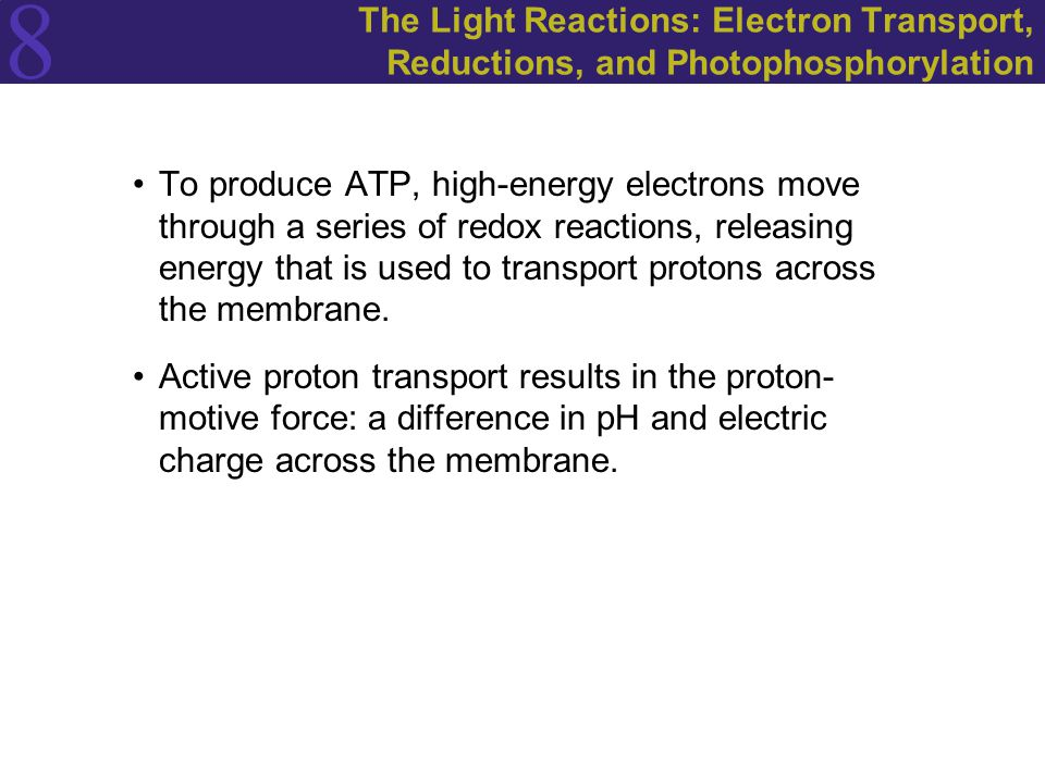 The Light Reactions: Electron Transport, Reductions, and Photophosphorylation