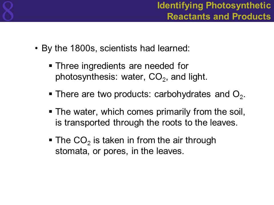 Identifying Photosynthetic Reactants and Products