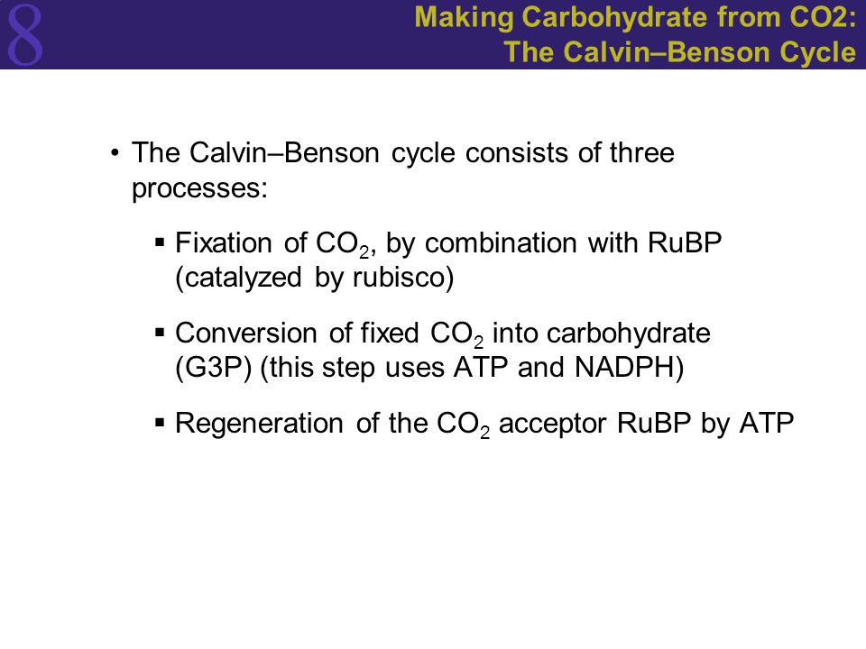 Making Carbohydrate from CO2: The Calvin–Benson Cycle