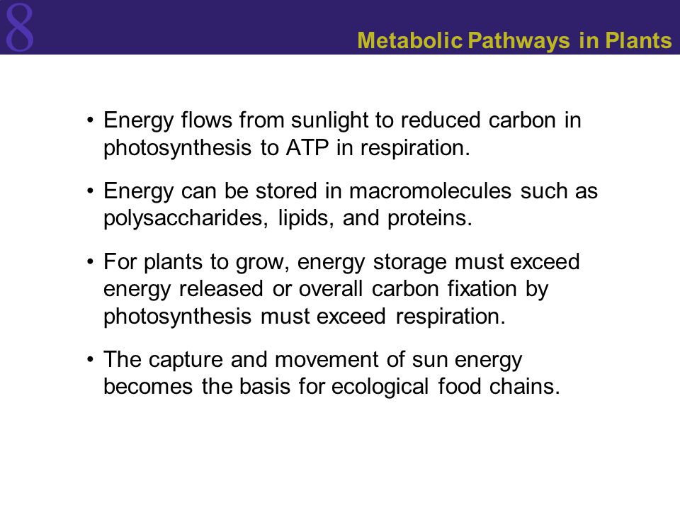 Metabolic Pathways in Plants