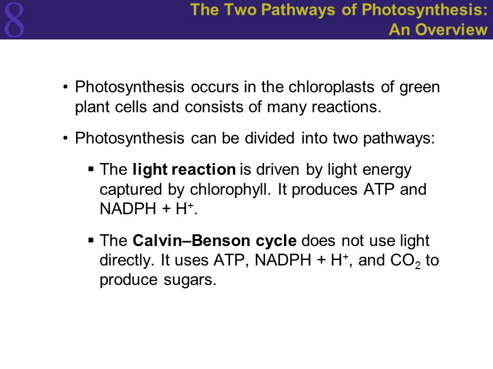 The Two Pathways of Photosynthesis: An Overview