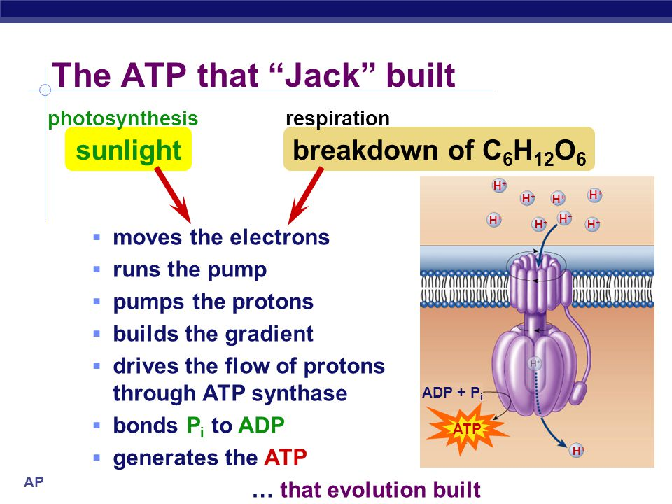 The ATP that Jack built