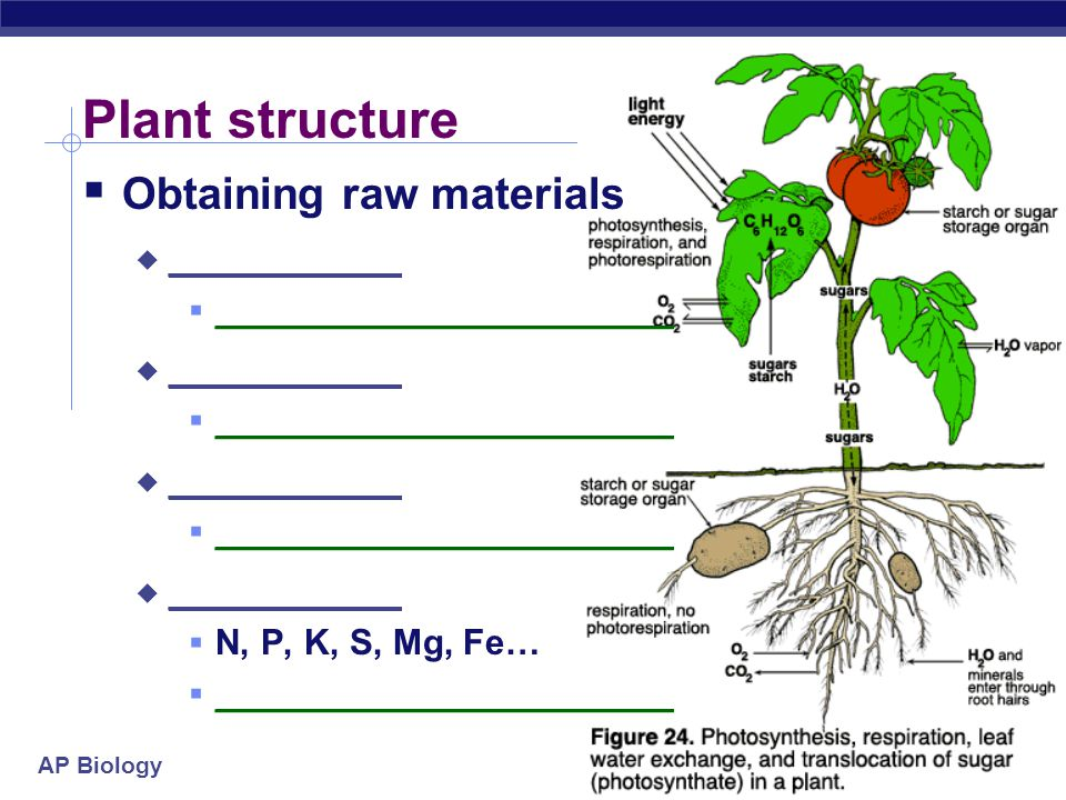 Plant structure Obtaining raw materials __________