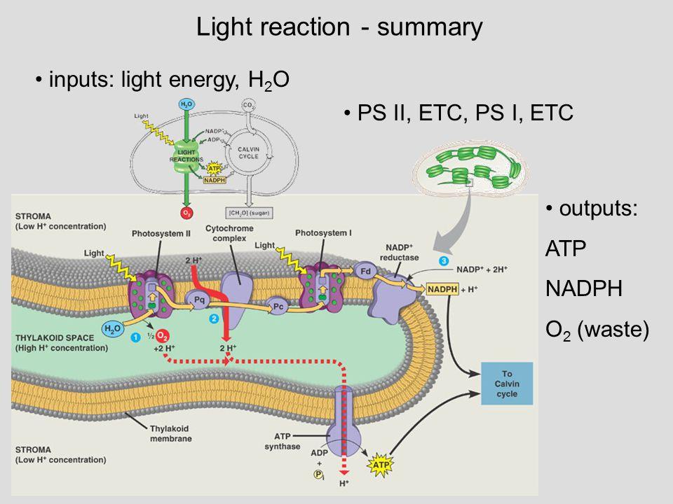 Light reaction - summary