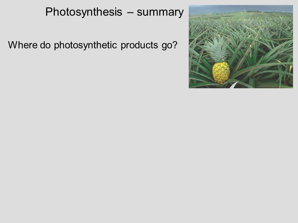 Photosynthesis – summary