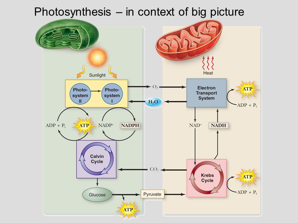 Photosynthesis – in context of big picture