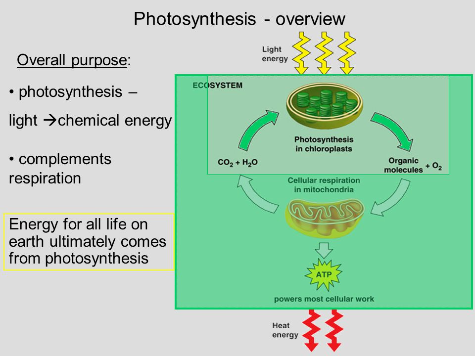 Photosynthesis - overview