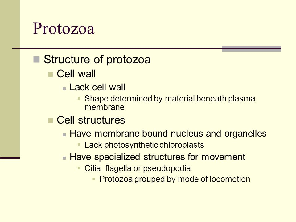 Protozoa Structure of protozoa Cell wall Cell structures