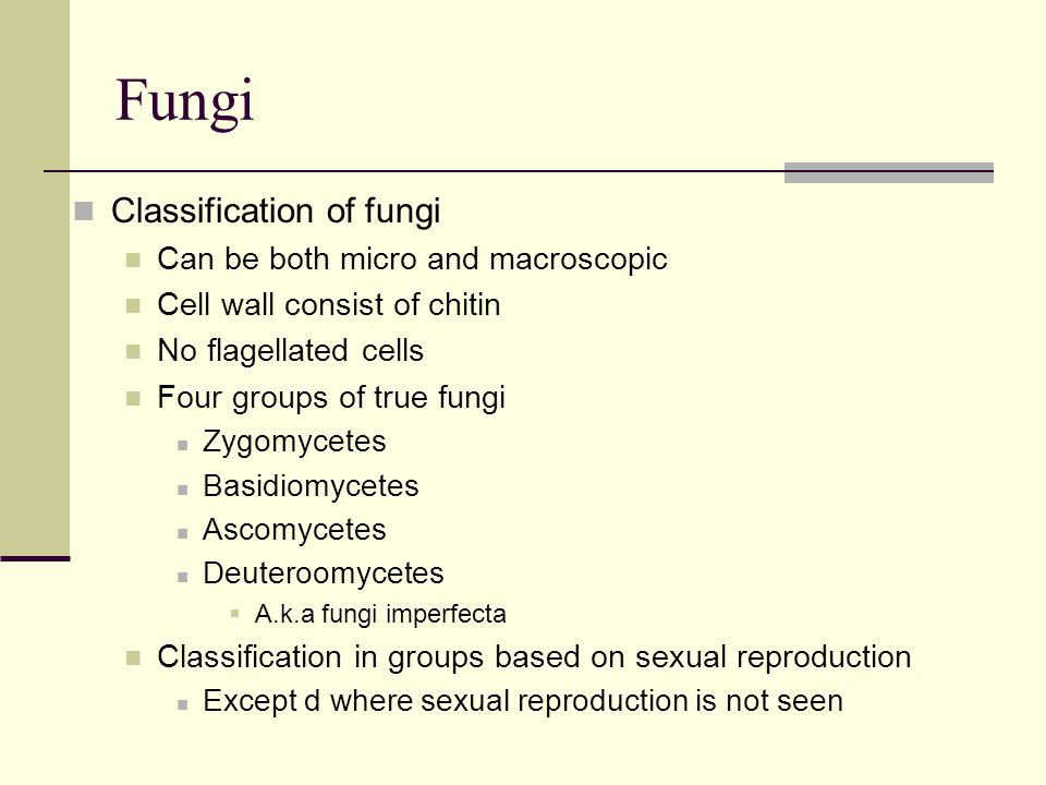 Fungi Classification of fungi Can be both micro and macroscopic