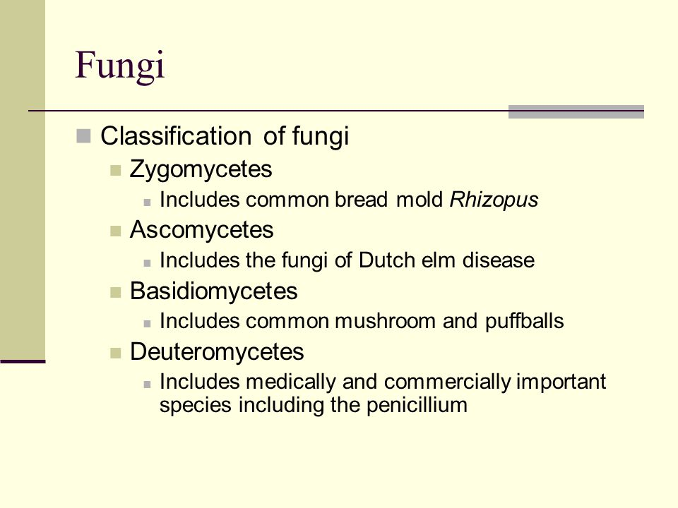 Fungi Classification of fungi Zygomycetes Ascomycetes Basidiomycetes