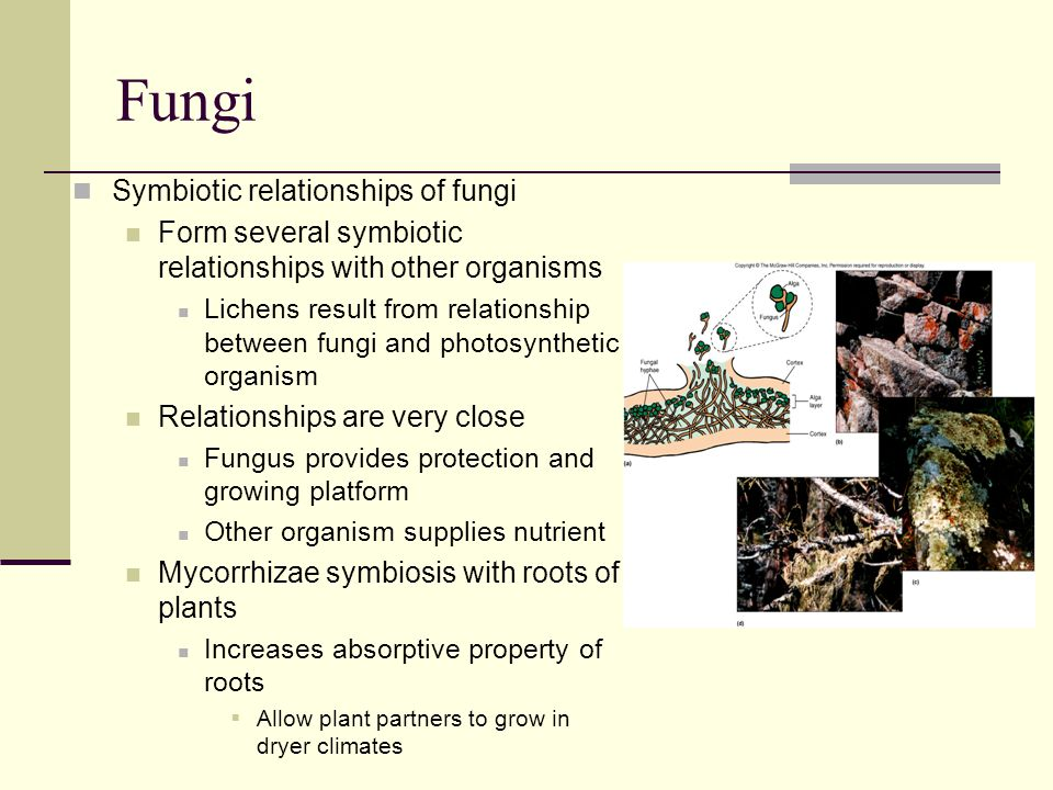Fungi Symbiotic relationships of fungi