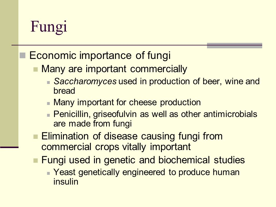 Fungi Economic importance of fungi Many are important commercially