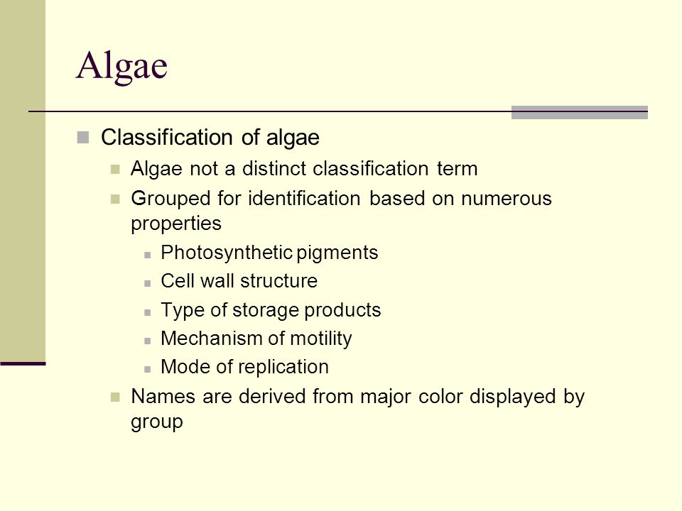Algae Classification of algae Algae not a distinct classification term