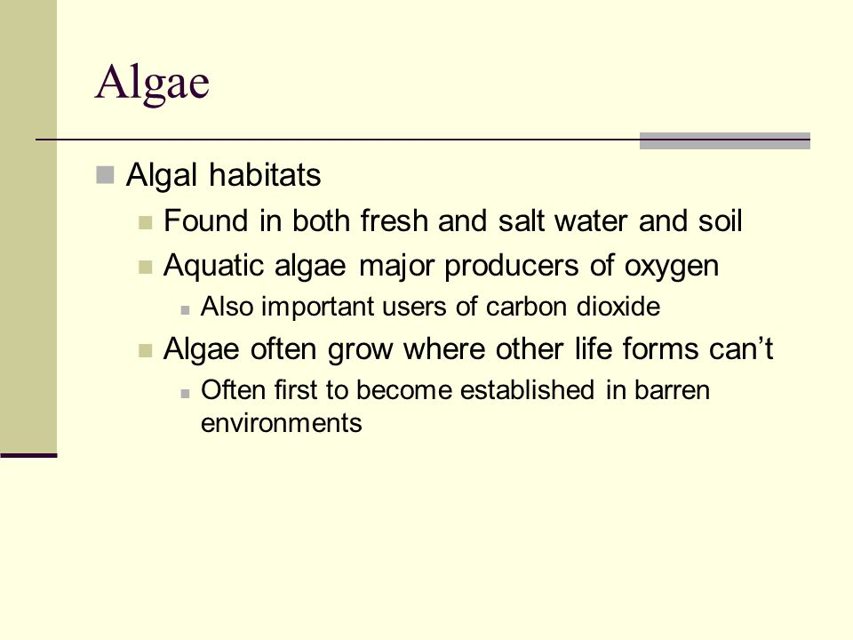 Algae Algal habitats Found in both fresh and salt water and soil