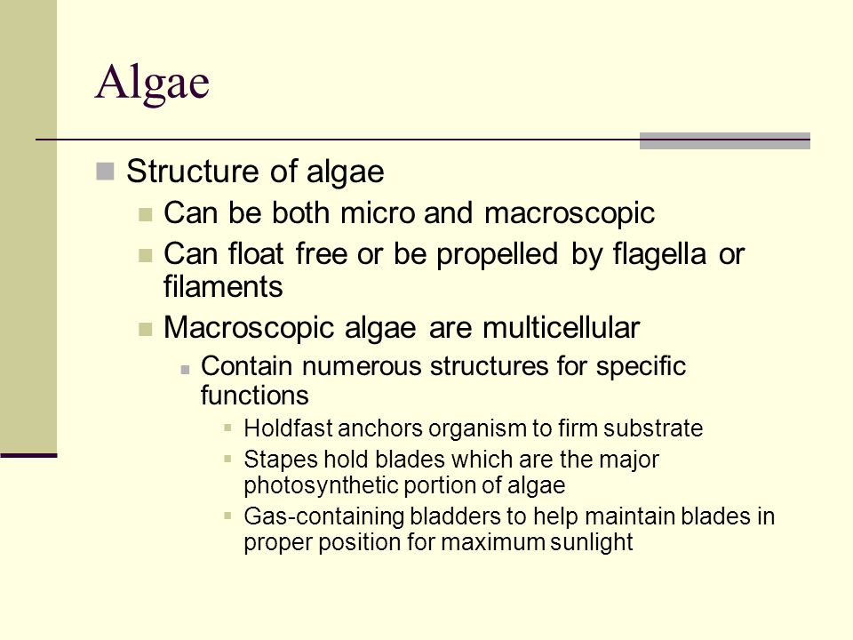 Algae Structure of algae Can be both micro and macroscopic