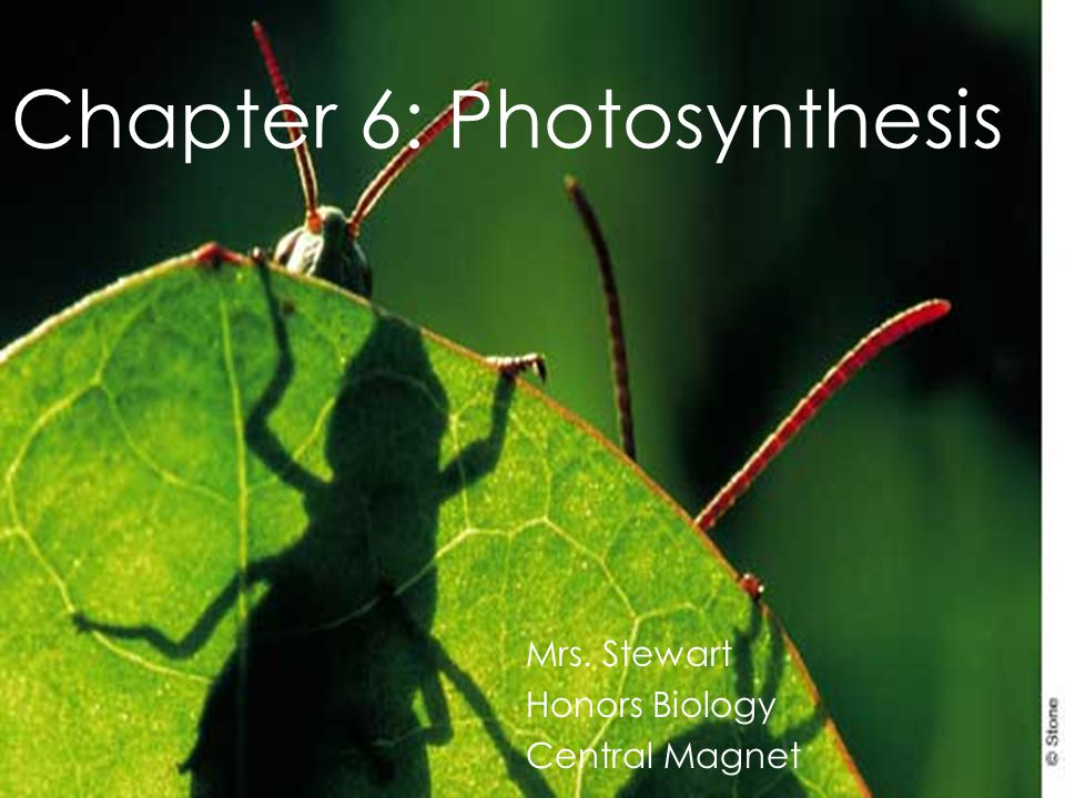 Chapter 6: Photosynthesis