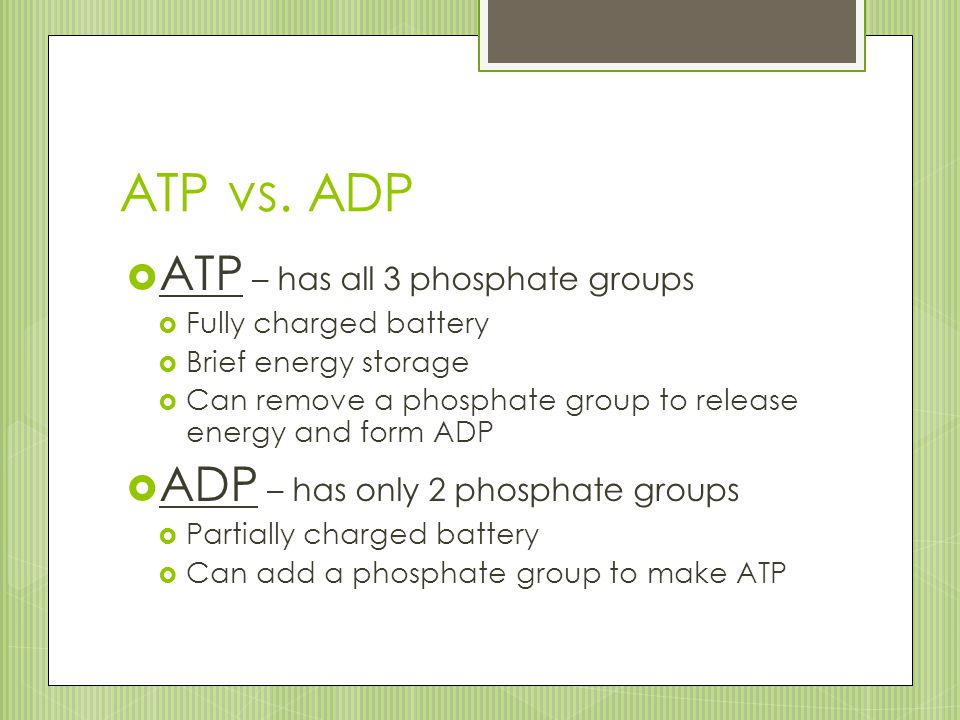 ATP vs. ADP ATP – has all 3 phosphate groups