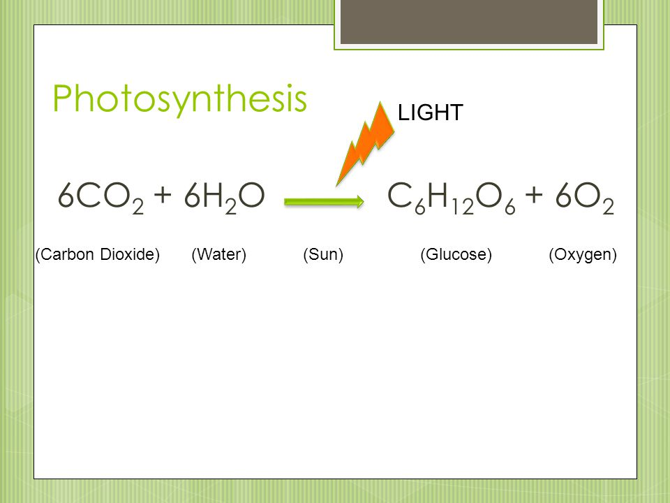Photosynthesis 6CO2 + 6H2O C6H12O6 + 6O2 LIGHT (Carbon Dioxide)